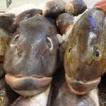 Fischpreis in Uruguay