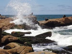 Cabo Polonio Seelöwen