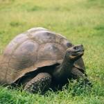 Reisekosten, Reisebudget und Kreuzfahrtpreise auf den Galapagosinseln in Ecuador