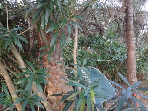 Campen im südamerikanischen Dschungel