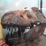 Dinosaurier Schädel Argentinien